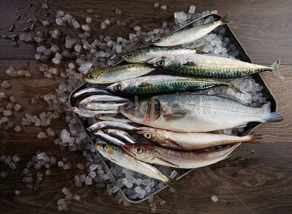 Fresco peixe cavala gelo Foto stock © lunamarina
