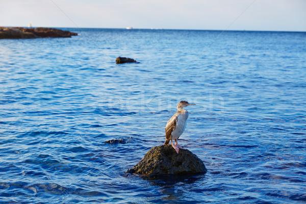 птица Средиземное море рок Постоянный пляж природы Сток-фото © lunamarina