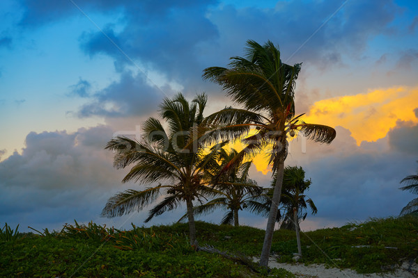 Caribbean sunset palm trees Riviera Maya  Stock photo © lunamarina
