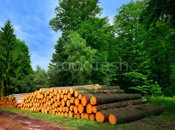 Wooden logs timber stacked in Harz Germany     Stock photo © lunamarina