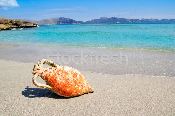 Tengerpart Mallorca római mediterrán tenger óceán Stock fotó © lunamarina