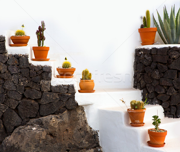 Cactus clay pots in Lanzarote over white stairs Stock photo © lunamarina