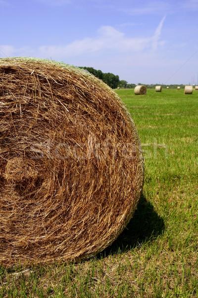 Golden Straw Hay Bales in american countryside Stock photo © lunamarina