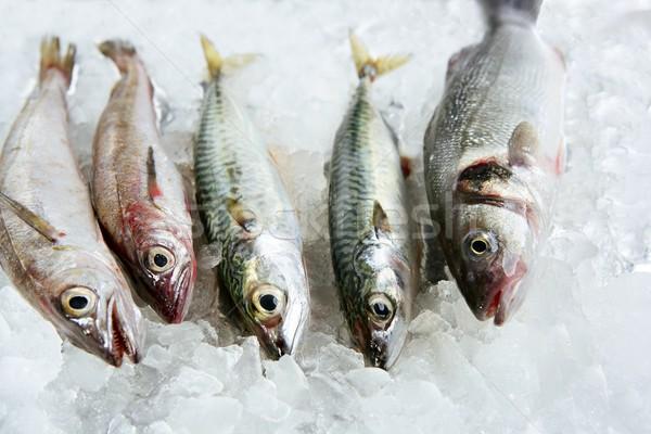 Pesce frutti di mare ghiaccio sgombri natura mare Foto d'archivio © lunamarina