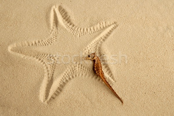Karibik Sand Seestern Fußabdruck Strand Fisch Stock foto © lunamarina