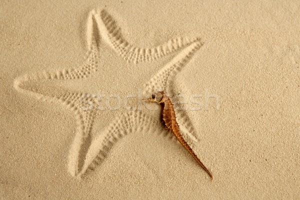 Caribbean sand seahorse over starfish footprint Stock photo © lunamarina