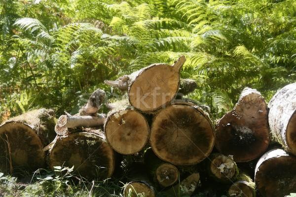 Gesneden brandhout patroon natuur home Stockfoto © lunamarina