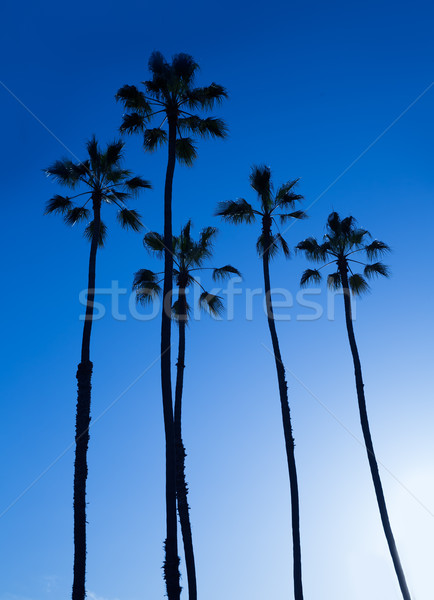 Californie élevé palmiers ciel bleu USA ciel Photo stock © lunamarina
