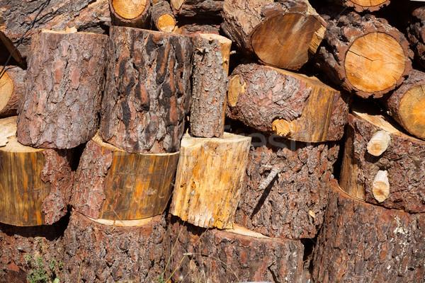 Brandhout pijnboom rij Spanje brand Stockfoto © lunamarina