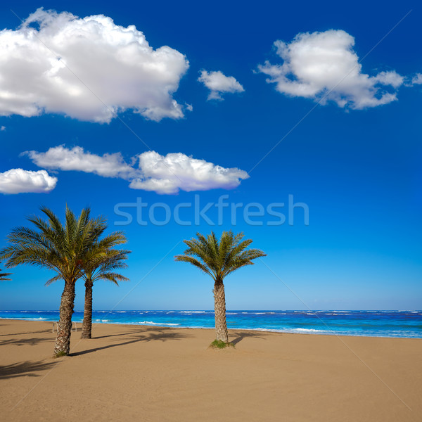 Denia beach Las Marinas with palm trees Alicante Stock photo © lunamarina