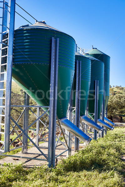 Feed hopper for livestock in green metal Stock photo © lunamarina