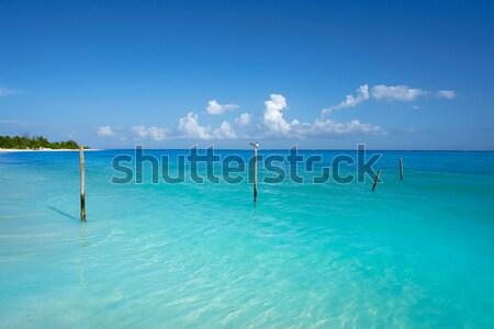 Caribbean pelican turquoise beach tropical sea Stock photo © lunamarina