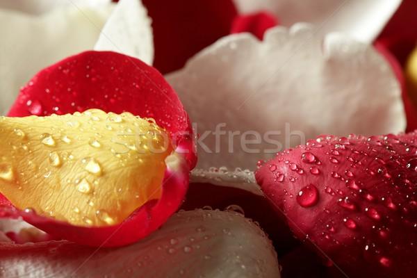 Colorato rosa petalo pattern wallpaper texture Foto d'archivio © lunamarina