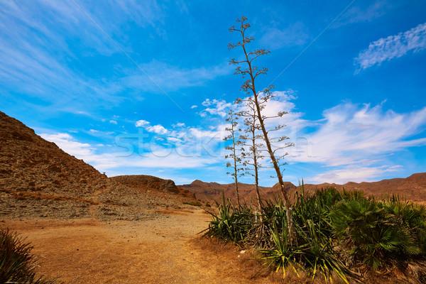 Almeria Playa del Monsul beach at Cabo de Gata Stock photo © lunamarina