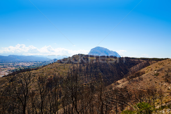 Montgo Javea Xabia burned fire trees in Alicante Stock photo © lunamarina