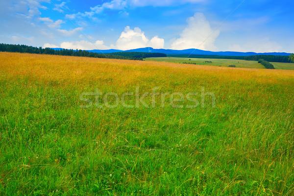 緑 草原 森林 ドイツ 農業 空 ストックフォト © lunamarina