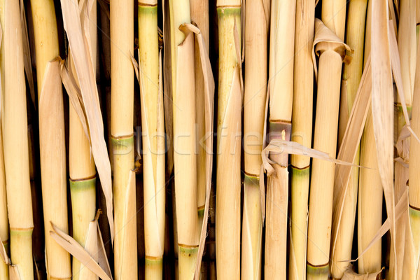 Cane texture used as fence or sunroof Stock photo © lunamarina