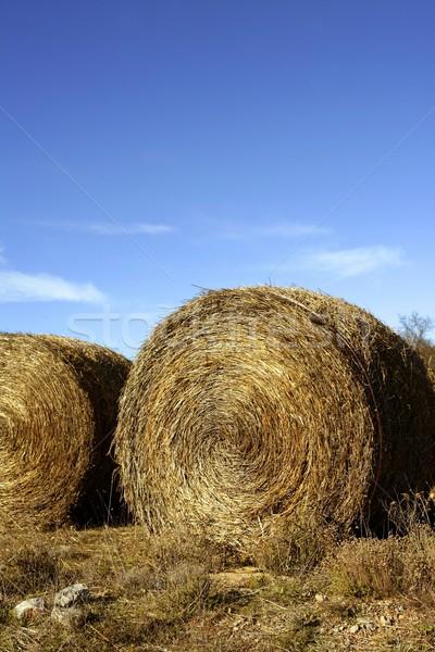 Yellow straw round bale outdoor, blue sky Stock photo © lunamarina
