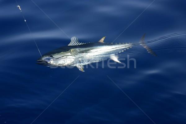 Blauw vin tonijn middellandse zee vissen Stockfoto © lunamarina