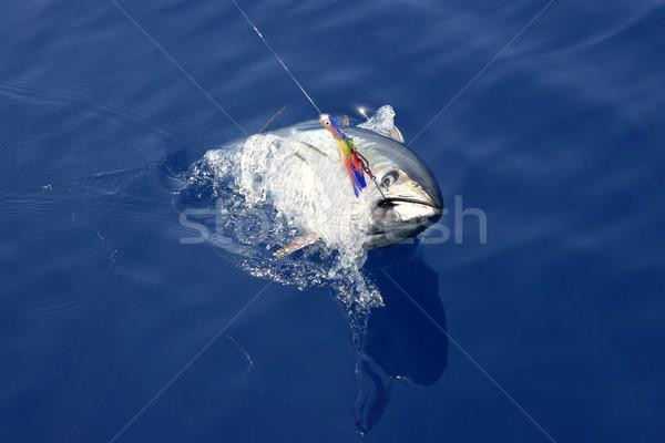 Mavi yüzgeç ton balığı akdeniz balık tutma Stok fotoğraf © lunamarina