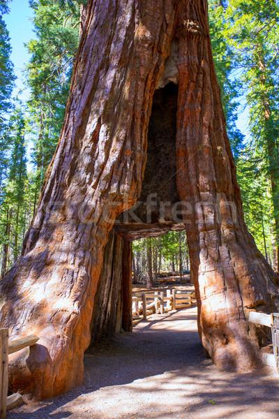 セコイア ゲート ヨセミテ カリフォルニア ヨセミテ国立公園 ストックフォト © lunamarina
