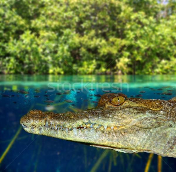 Krokodil zwemmen moeras omhoog beneden landschap Stockfoto © lunamarina