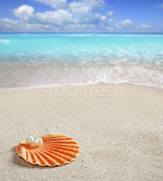 Caribbean pearl on shell white sand beach tropical Stock photo © lunamarina