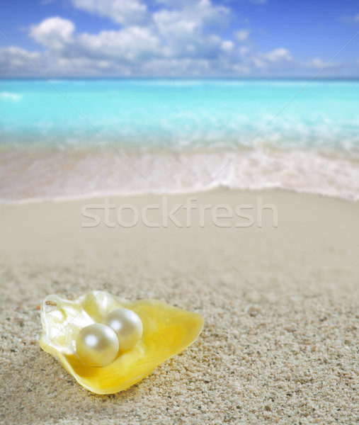 Photo stock: Caraïbes · perle · shell · sable · blanc · plage · tropicales