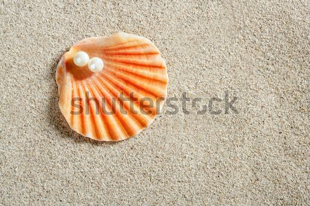 clam shell macro on clear white caribbean sand Stock photo © lunamarina