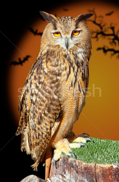Eagle owl nuit oiseau halloween bat orange Photo stock © lunamarina