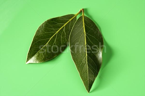 Defne yaprakları yeşil stüdyo parlak ağaç Stok fotoğraf © lunamarina