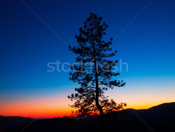 日没 ヨセミテ国立公園 ツリー シルエット カリフォルニア 米国 ストックフォト © lunamarina