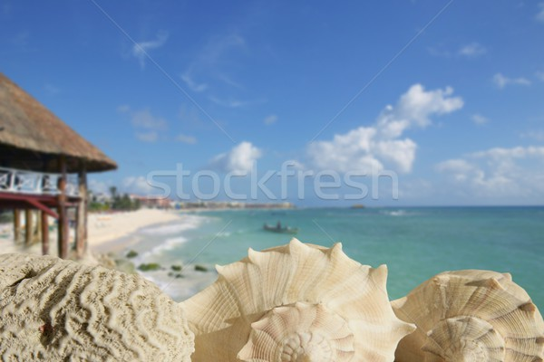 sea shells in Playa del Carmen Quintana Roo Stock photo © lunamarina