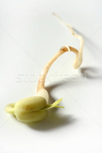 Soia bean vita crescita sementi Foto d'archivio © lunamarina
