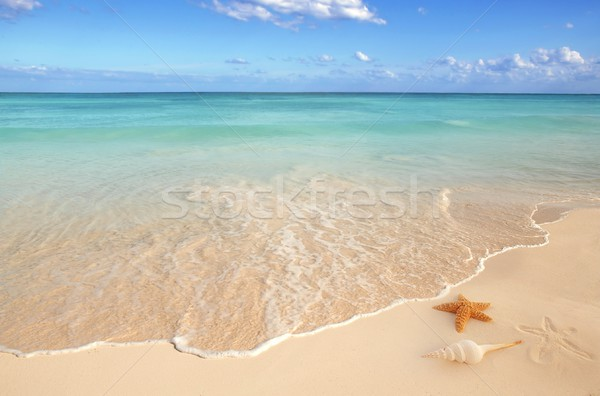 sea shells starfish tropical sand turquoise caribbean Stock photo © lunamarina
