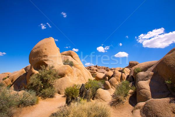 Skull rock in Joshua tree National Park Mohave California Stock photo © lunamarina