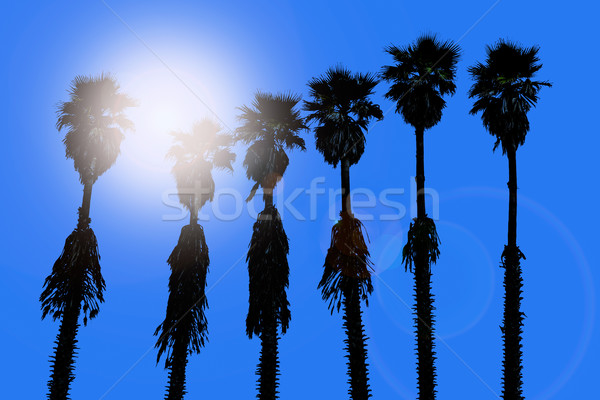 california palm trees washingtonia western surf flavour Stock photo © lunamarina
