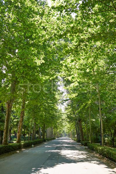 Park kertek Spanyolország Andalúzia város természet Stock fotó © lunamarina