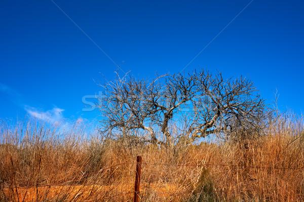 Средиземное море миндаль сушат трава зима небе Сток-фото © lunamarina