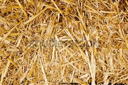 Granen stro oogst textuur gras zomer Stockfoto © lunamarina
