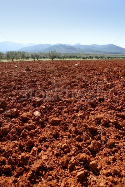 Red clay soil texture on a sunny morning  Stock photo © lunamarina