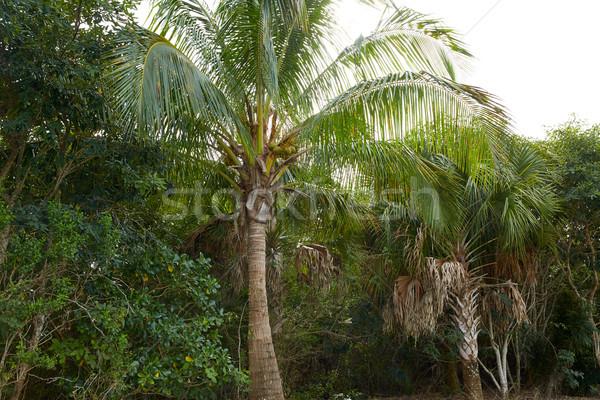 Flórida ilha árvore árvores palma Foto stock © lunamarina