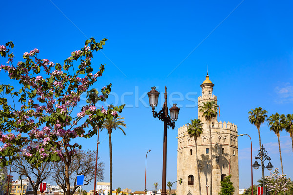 塔 スペイン 建物 市 石 アーキテクチャ ストックフォト © lunamarina