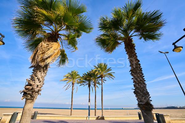 Stock fotó: Valencia · LA · tengerpart · Spanyolország · pálmafák · víz
