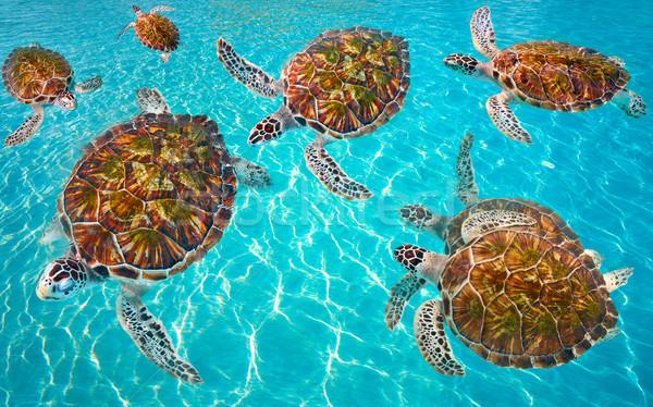 Riviera Maya turtles photomount on Caribbean Stock photo © lunamarina