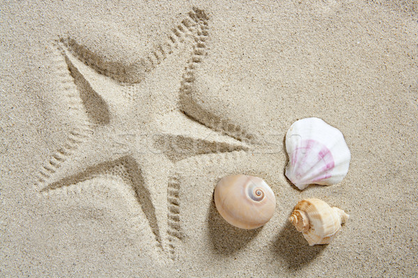 beach sand starfish print shells and sea snail summer Stock photo © lunamarina