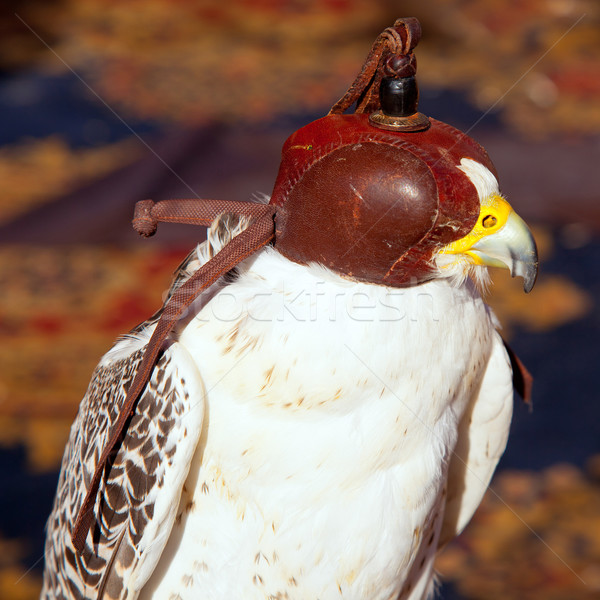 bird falcon with falconry blind hood Stock photo © lunamarina