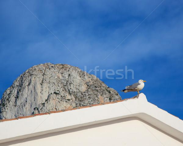 Mediterrânico gaivota telhado ponta casa construção Foto stock © lunamarina