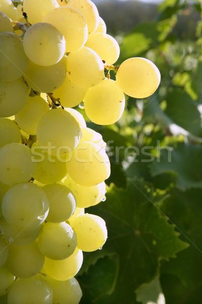 красивой зеленый желтый грейпфрут макроса подробность Сток-фото © lunamarina
