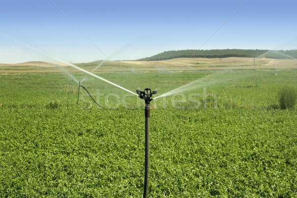 Irrigation vegetables field with sprinkler Stock photo © lunamarina